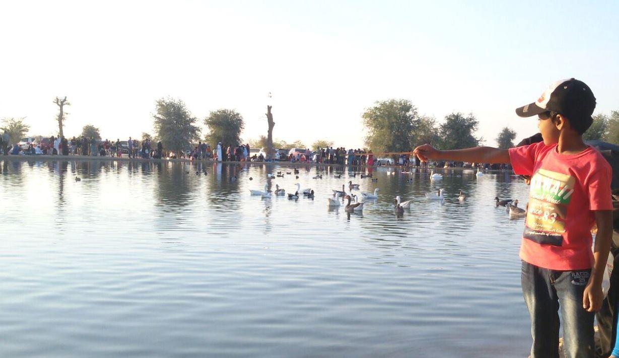 Al Qudra Lake The New Attraction In Dubai Dayofdubai