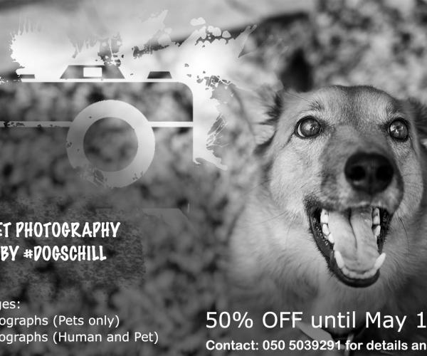 Pet Photography by #DogsChill with 50% Discount