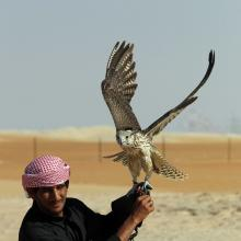 Gone In 16 Seconds! Falcons Race At Al Dhafra Festival